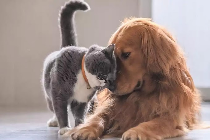 Qué hacer con las mascotas durante la cuarentena