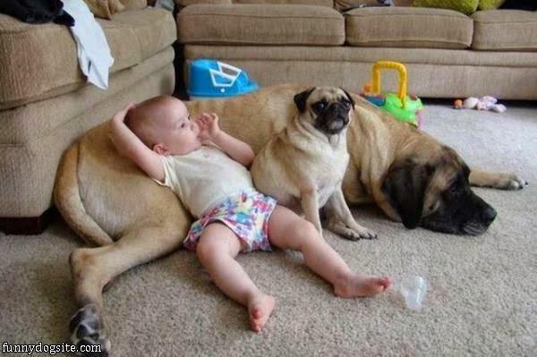 Photo Bébé avec deux Chiens