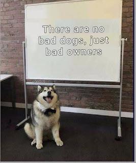 teacher,bad dogs