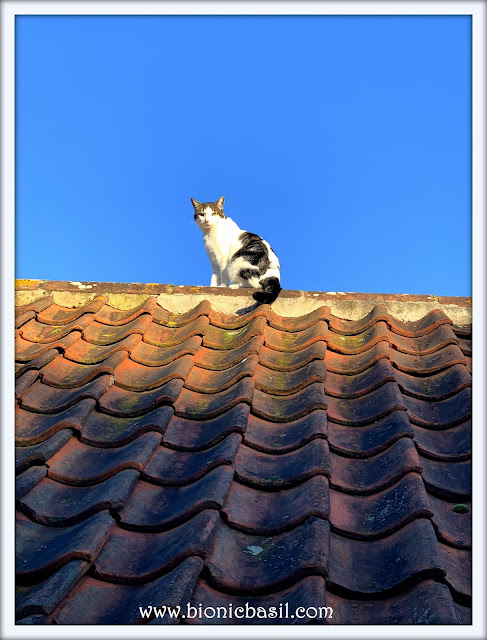 Melvyn's High Flying Start To The New Year on Mancat Monday at BBHQ ©BionicBasil® 2020