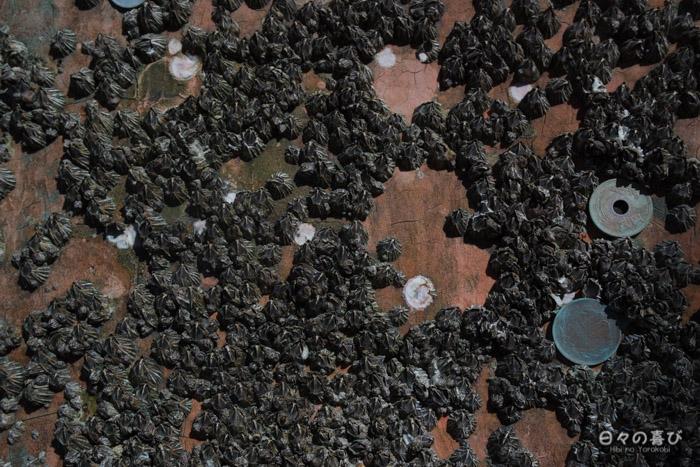 Pièces de monnaie incrustées sur le torii, plage de Miyajima, Hiroshima-ken