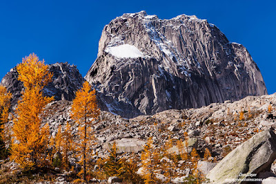 Snowpatch Spire above fall larches in Bugaboo Provincial Park, British Columbia, Canada.