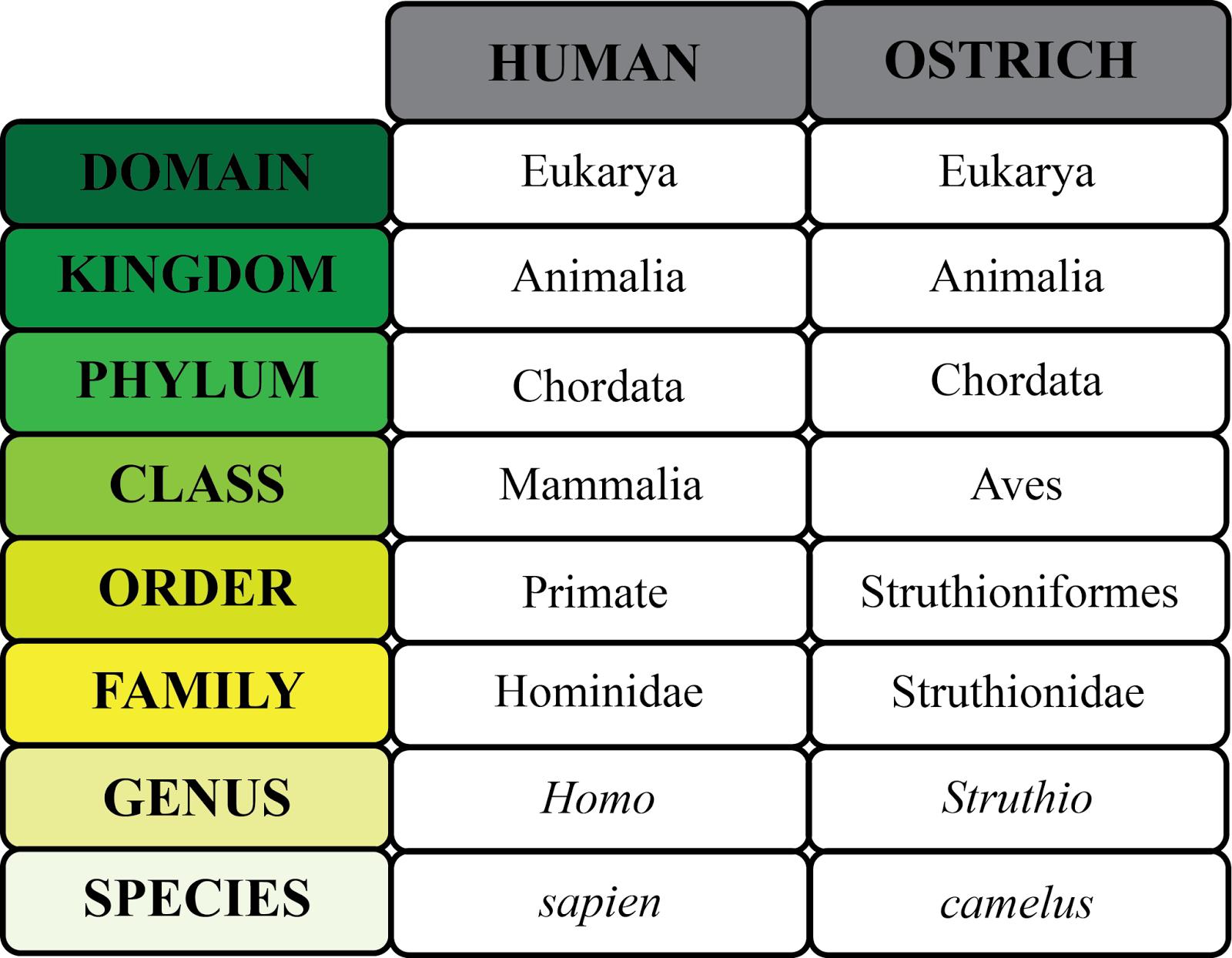 Unit 8 Tree Of Life Amp Classification