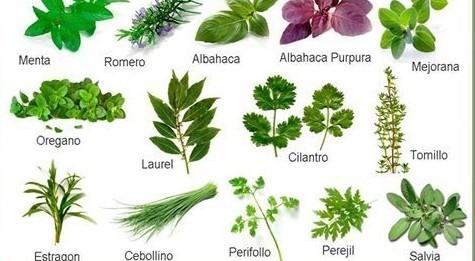 Superpauja 22 febrero 2017 - Plantas aromaticas jardin ...