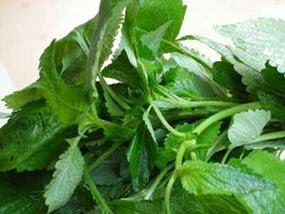 Tác dụng chữa bệnh của rau gia vị
