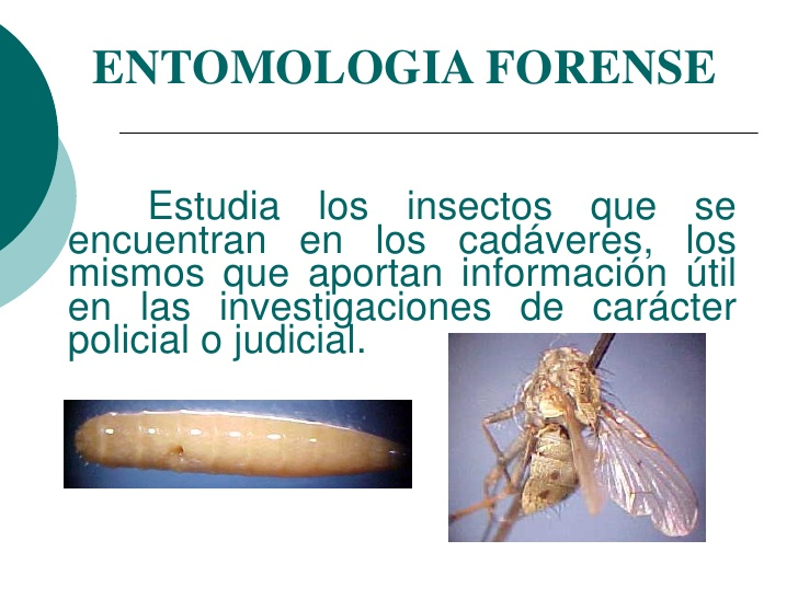 Entomología Forense Definición Historia Y Evolución Objetivos Y