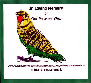 In loving memory of our parakeet
