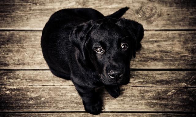 300 nomes para cachorros