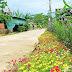 Con đường hoa ở miền quê Nghệ An