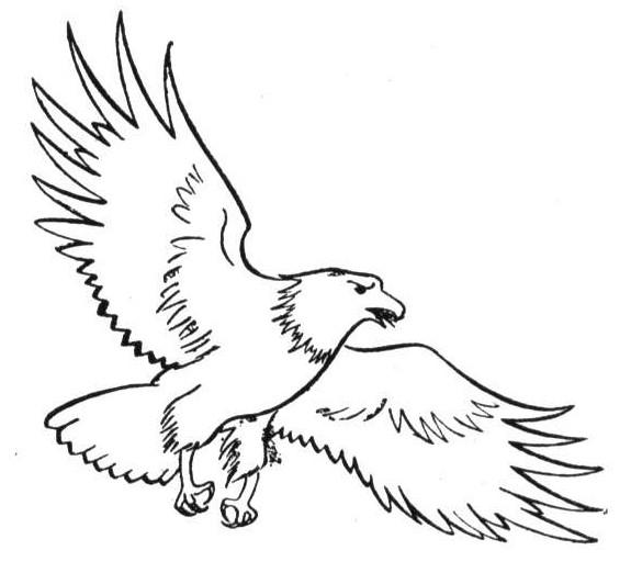 7000 Koleksi Gambar Burung Elang Kartun Hitam Putih HD Terbaru