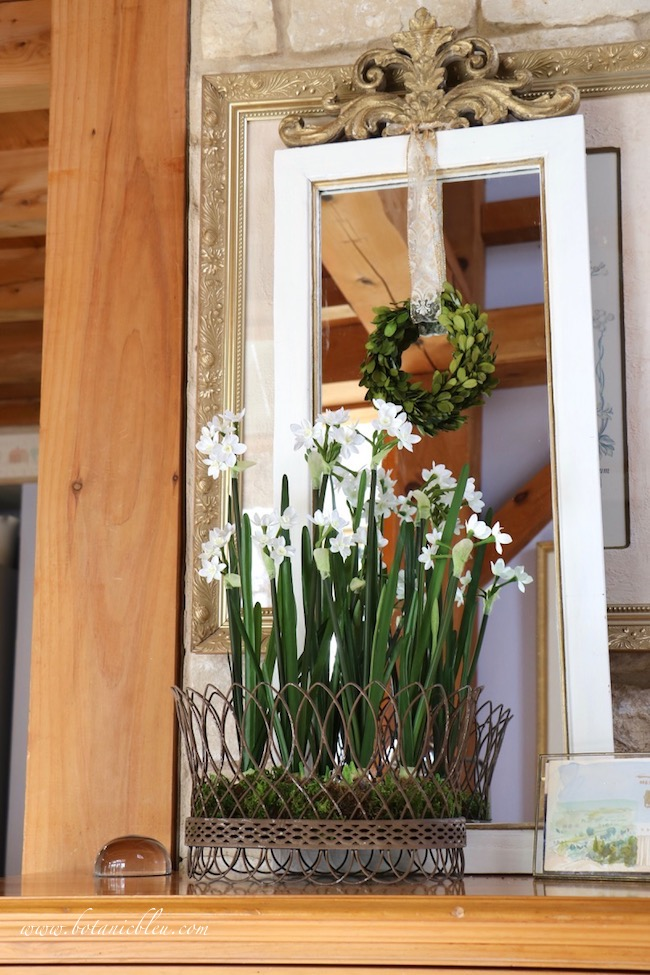 Breath of Spring French Country Wire Basket of Daffodils in front of a mirror doubles the number of flowers