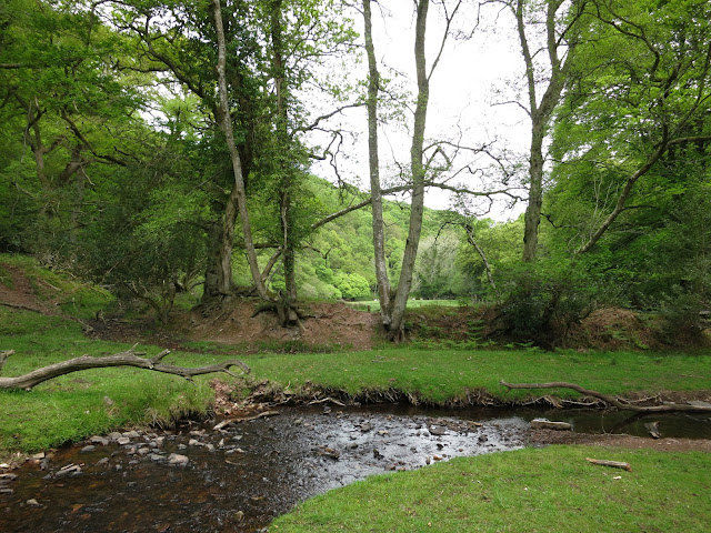 Wide, shallow stream beside bank of exposed tree roots with wooded hill beyond