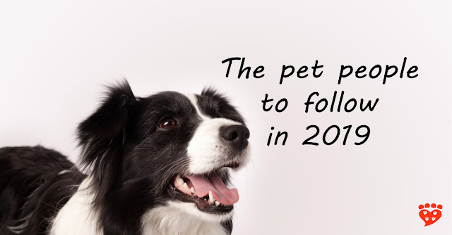 Dogs, cats, science, animal behavior and animal welfare - the people to follow on social media in 2019