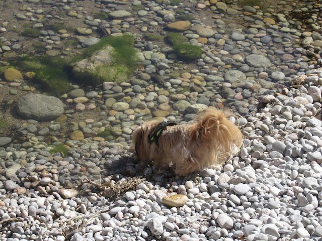 Bucht Sa Calobra / Torrent de Pareis Mallorca Spanien Balearen Hund Bronco Durst