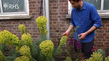 Un pequeño jardín estilo pradera en Londres con Tom Massey