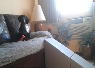 rampas para sofá