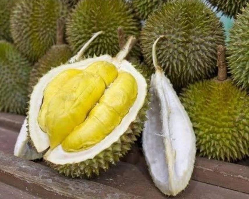 bibit buah durian musang king hasil okulasi bisa berbuah dalam pot Payakumbuh
