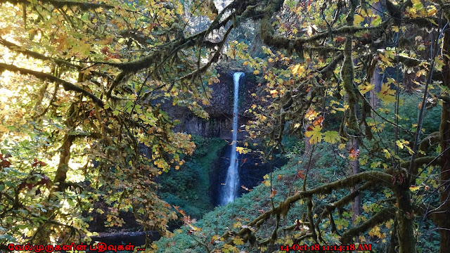 Scenic Waterfalls in Silver Falls State Park