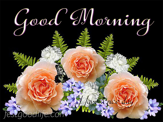 very beautiful good morning pics and images