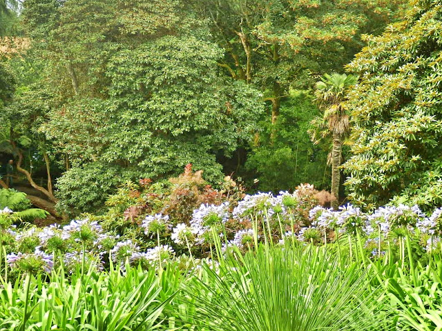 Plants & trees at Llost Gardens of Heligan, Cornwall