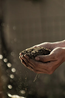 How To Choose The Perfect Soil Type For Gardening?