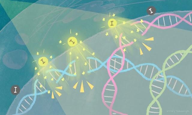 Efeito fotoelétrico pode potencializar a destruição de tumores via radioterapia.