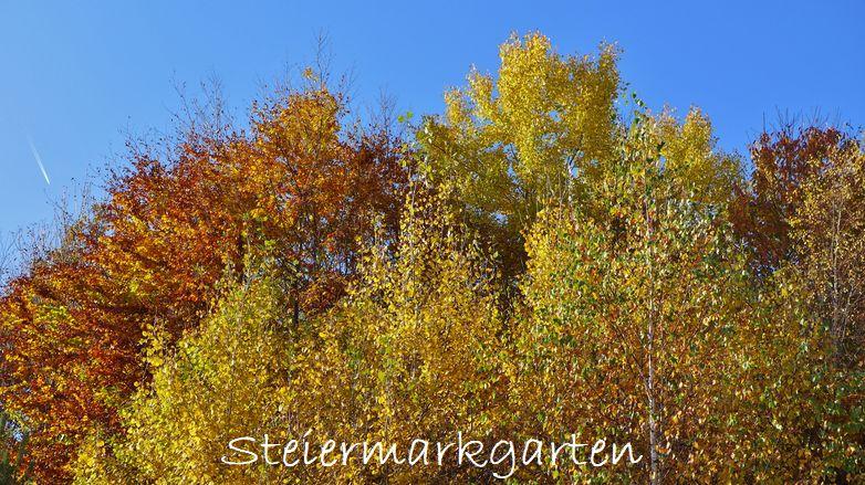 Goldener-Herbst-Steiermarkgarten
