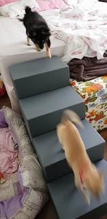 exercícios na escada da cama para cães
