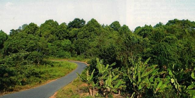 Sentra Durian Lokal Di Pulau Bintan