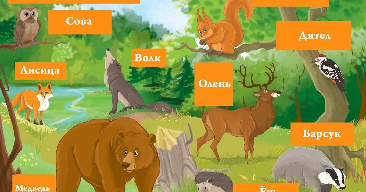 название всех животных в лесу с картинками без музыки смогла