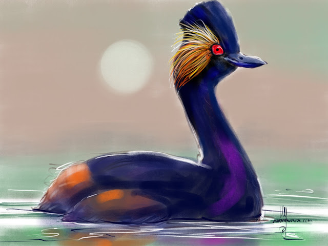 Black-necked Grebe bird painting by Artmagenta
