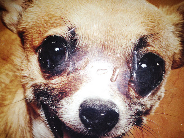 Why Do Dogs Cry? Is It OK For My Dog To Cry?