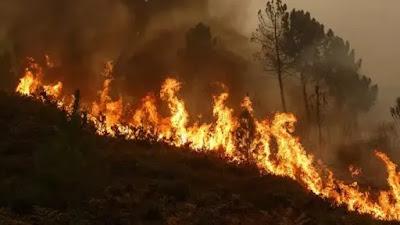 Uttrakhand : उत्तराखंड के टिहरी के छामुंड जंगल में लगी आग
