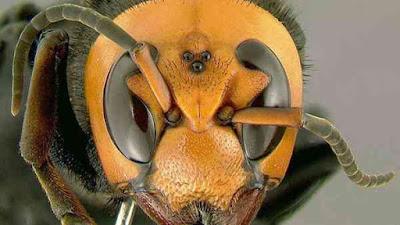 أخطر 5 حشرات في العالم
