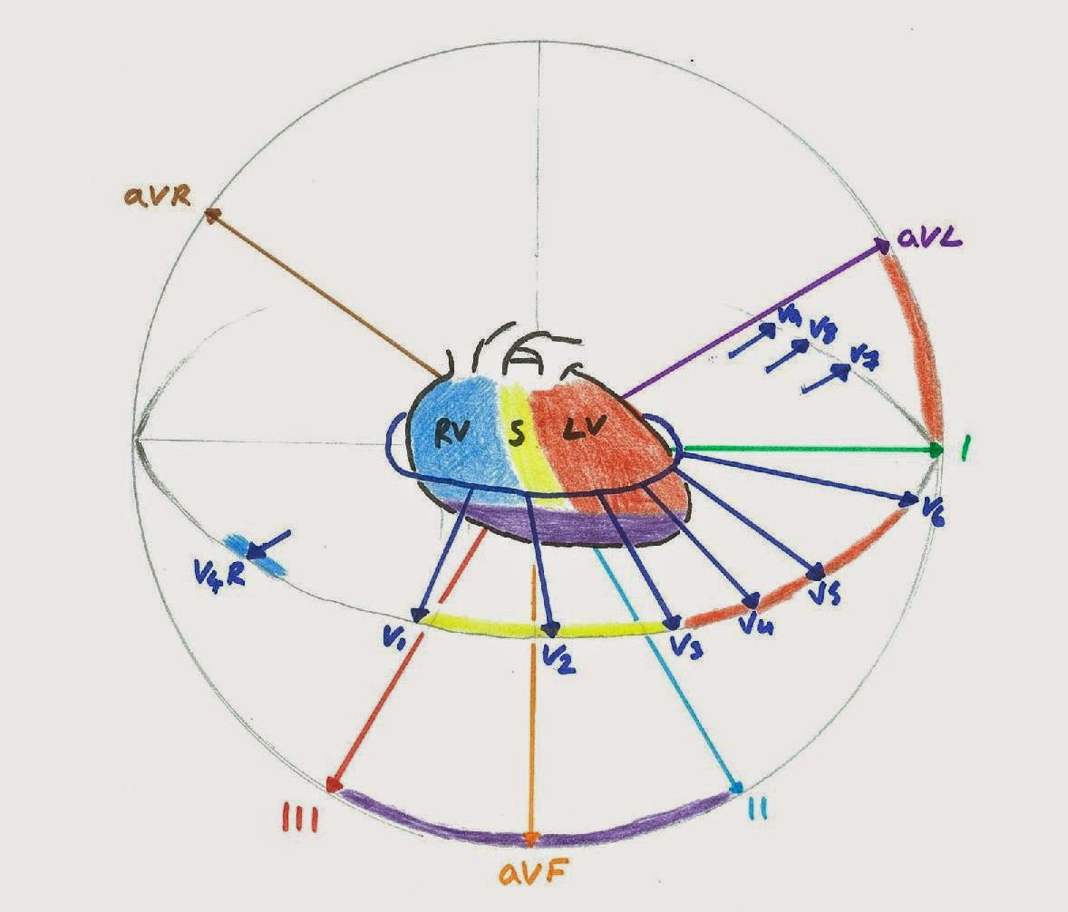 12 Lead Ekg Placement Diagram Sap Portal Architecture Hunting The Culprit Properly Understanding Ecg Leads