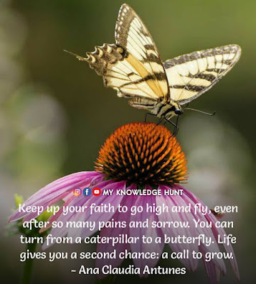 Butterfly Inspirational Quotes about Change, Butterfly Quotes about Death
