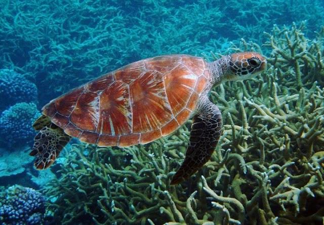 16 de junio dia mundial de las tortugas marinas