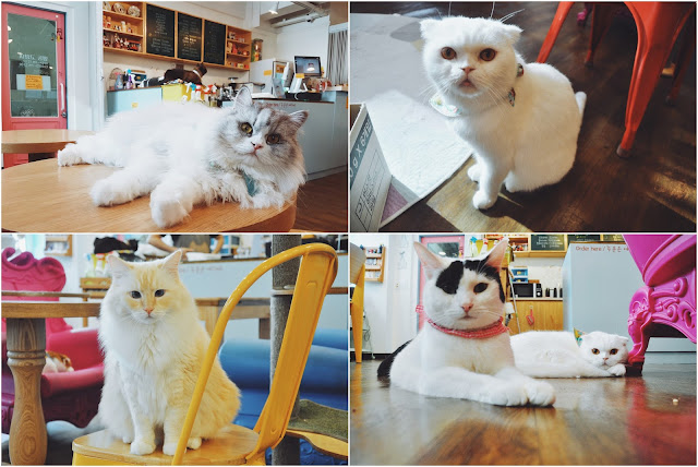 Myeongdong Cat Cafe, Myeongdong (명동)