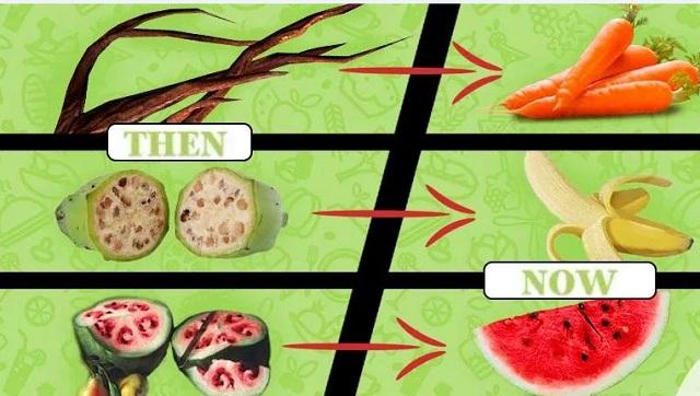 Tο 93% των γνησίων σπόρων εξαφανίστηκαν! και επικρατούν τα τροποποιημένα φρούτα και λαχανικά,δείτε πως ήταν πριν