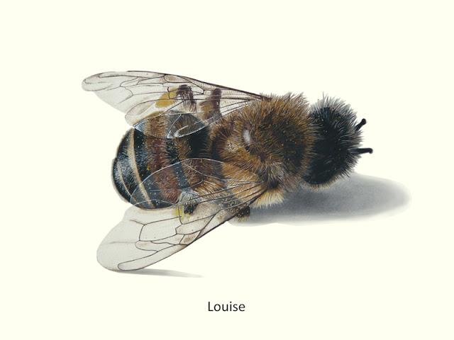 dessin d'une abeille morte nommée Louise