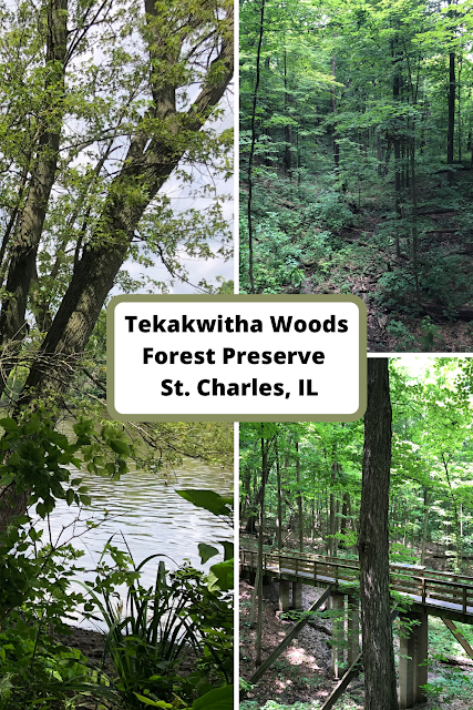 Soaking in Nature's Emerald Hues at Tekakwitha Woods Forest Preserve
