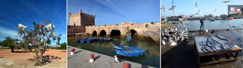 Capre che si arrampicano a brucare sugli alberi di argan e il forte Portoghese di Essaouria