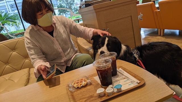 保護犬 ボーダーコリー トーマ イオンモール幕張新都心 ペットモール ドトールコーヒー