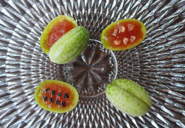 Pepquinos + Watermelon Purée copyright naoko takagi
