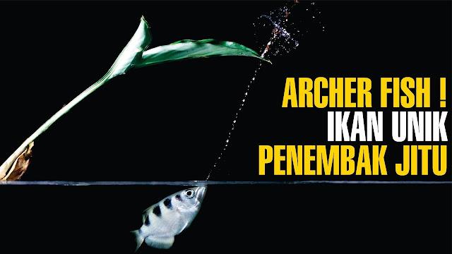 Biofisika pada ikan sumpit atau ikan penembak jitu