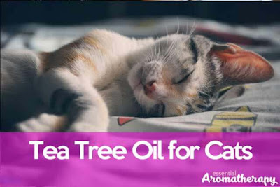 Tea Tree Oil For Cats: Essential Treatment for Fleas on Cats