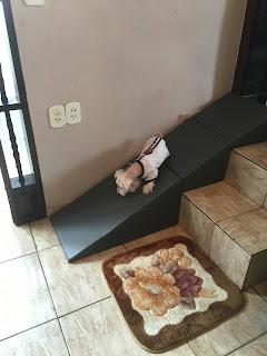 rampas de sobrepor escadas para cães