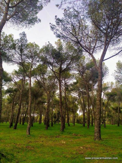 parques bonitos cerca de Madrid, Las Rozas