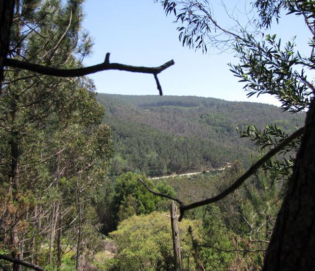 vegetação na montanha