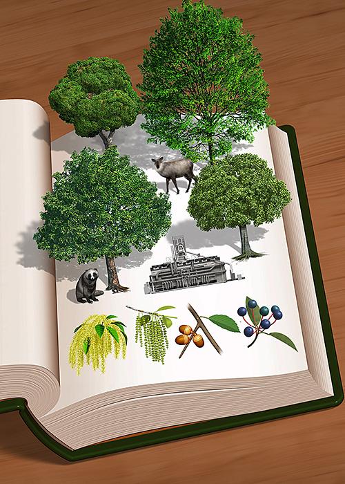 リアルイラスト、3DCG、、図鑑、木の図鑑、山の木、木の実、飛び出す本